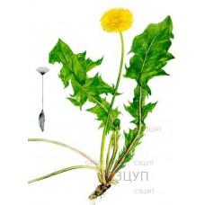 Гербарий Сорные растения (24 вида) формат А-3
