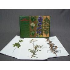 Гербарий Ядовитые растения (20 видов) формат А-3