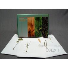 Гербарий Культурные растения (28 видов) формат А-3