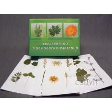 Гербарий Морфология растений (5 тем х 3 листа) формат А-3