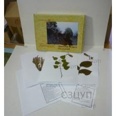 Гербарий Дикорастущие растения (28 видов) формат А-3