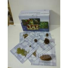 Коллекция Голосеменные растения