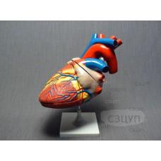 Модель Сердце (увеличенная)