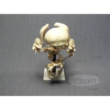 Модель Кости черепа (смонтированный на одной подставке)